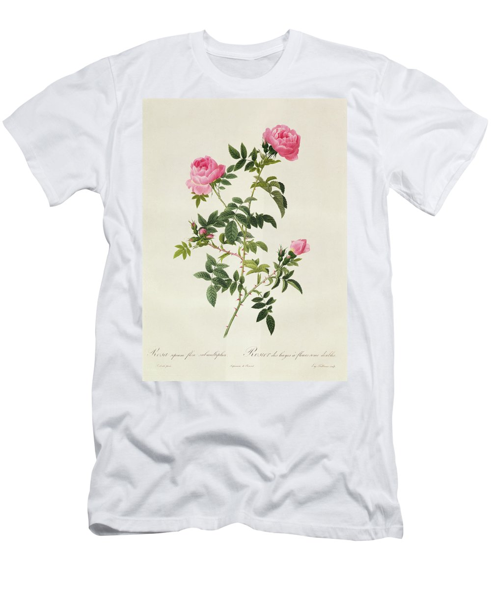 Rosa Men's T-Shirt (Athletic Fit) featuring the drawing Rosa Sepium Flore Submultiplici by Pierre Joseph Redoute
