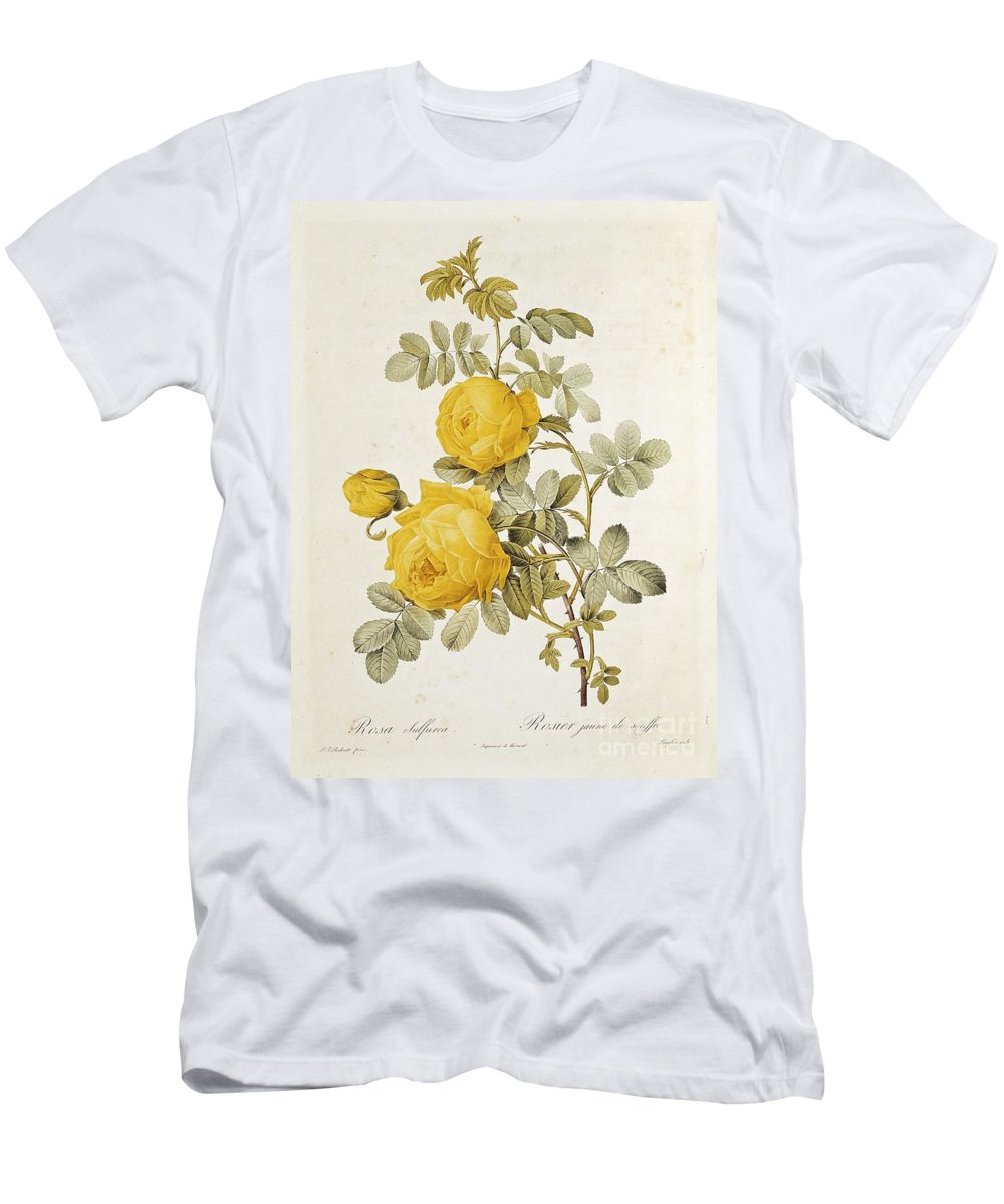 Rosa Men's T-Shirt (Athletic Fit) featuring the drawing Rosa Sulfurea by Pierre Redoute