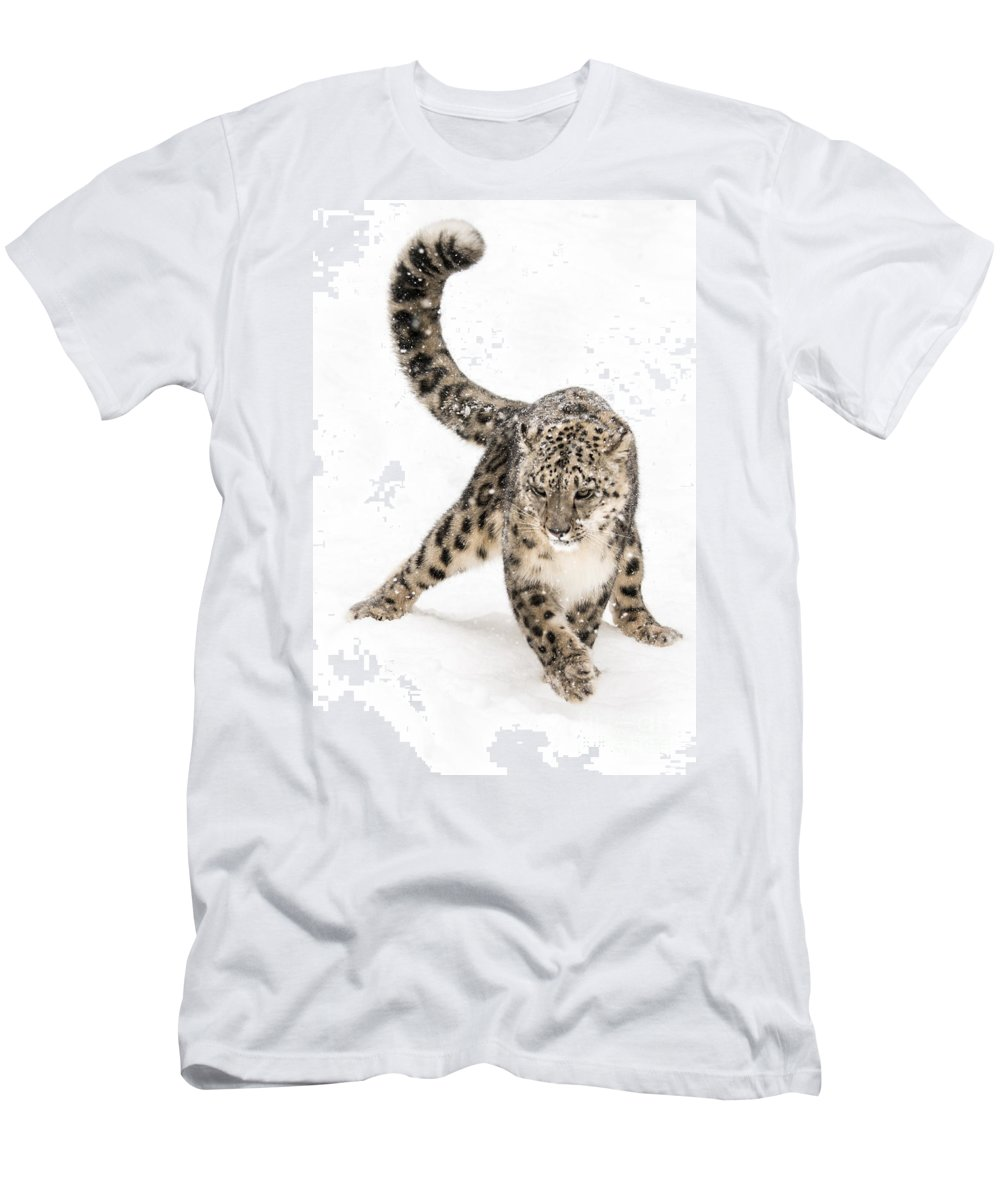 Animal Men's T-Shirt (Athletic Fit) featuring the photograph Snow Leopard On The Prowl Viii by Abeselom Zerit