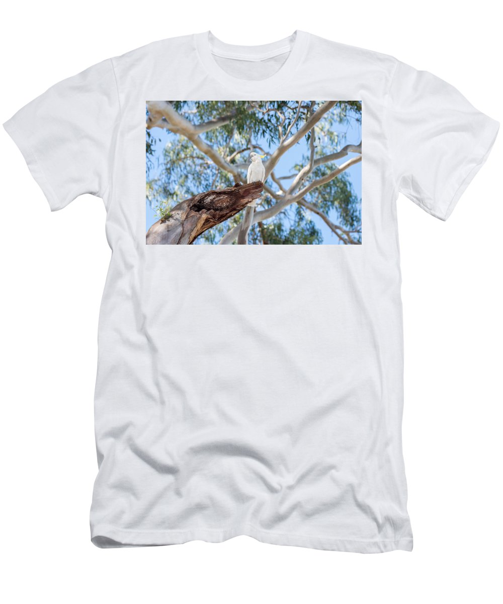 Bird Men's T-Shirt (Athletic Fit) featuring the photograph Sulphur-crested Cockatoo by Rodney Appleby
