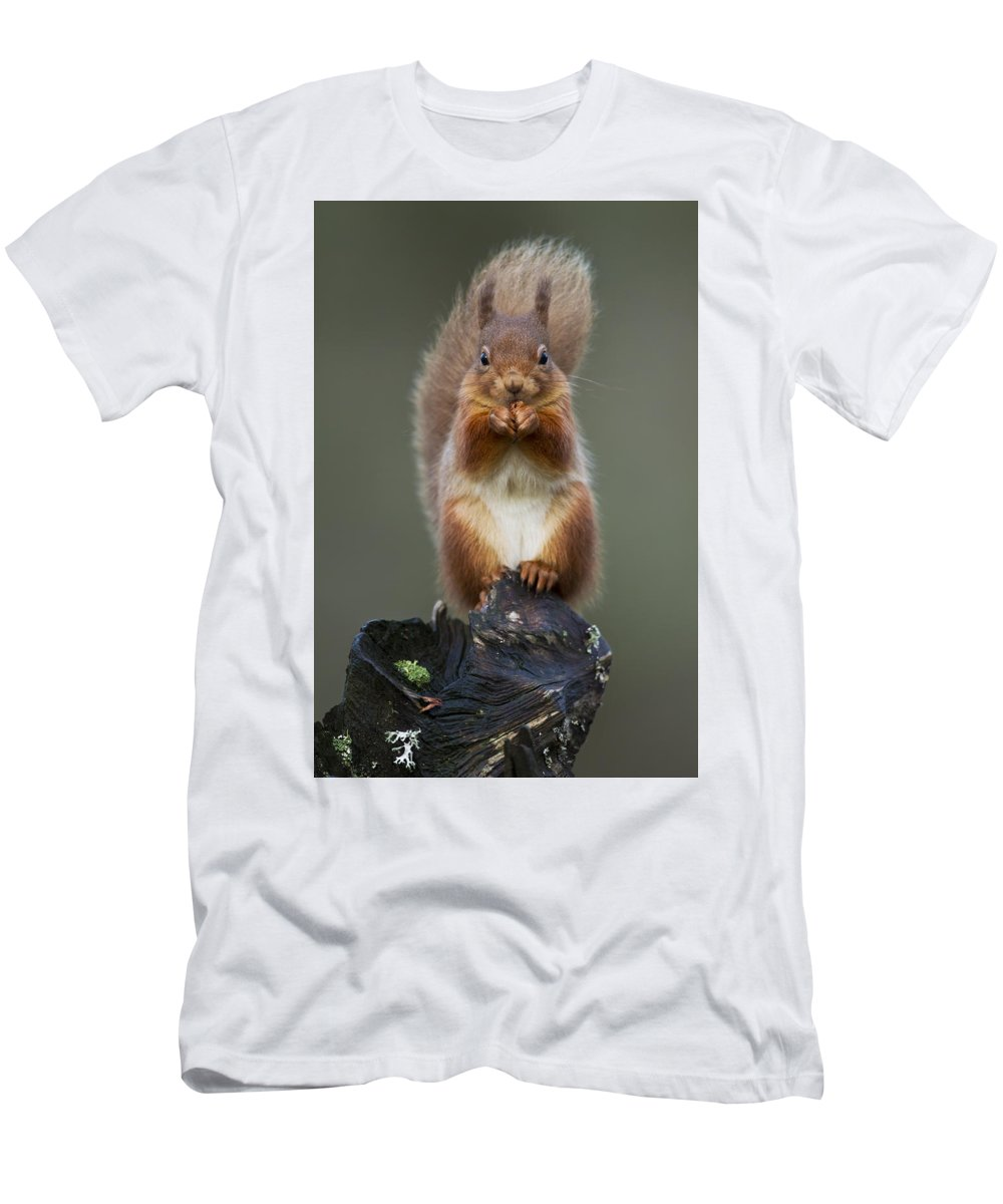 Red Squirrel Men's T-Shirt (Athletic Fit) featuring the photograph The Buddah by Calum Dickson