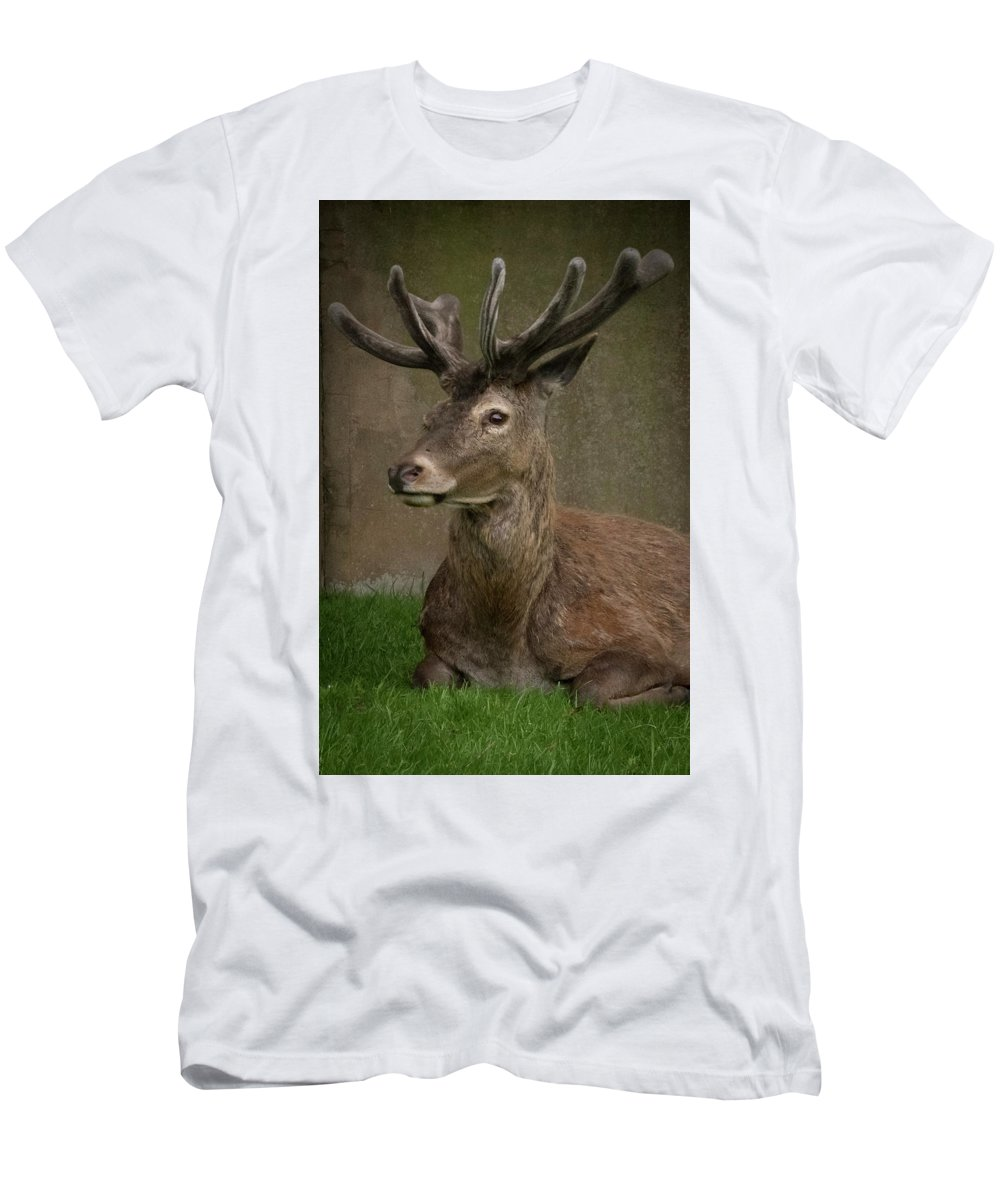 Stag Men's T-Shirt (Athletic Fit) featuring the photograph The Stag by Alex Vass