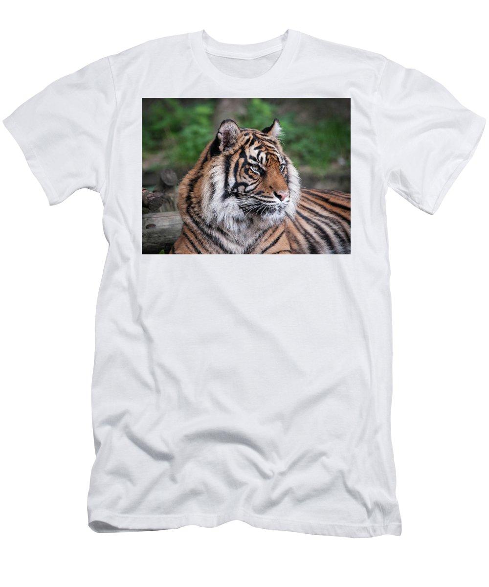 Tiger Men's T-Shirt (Athletic Fit) featuring the photograph Sumatran Tigress Portrait by Natasha Balletta