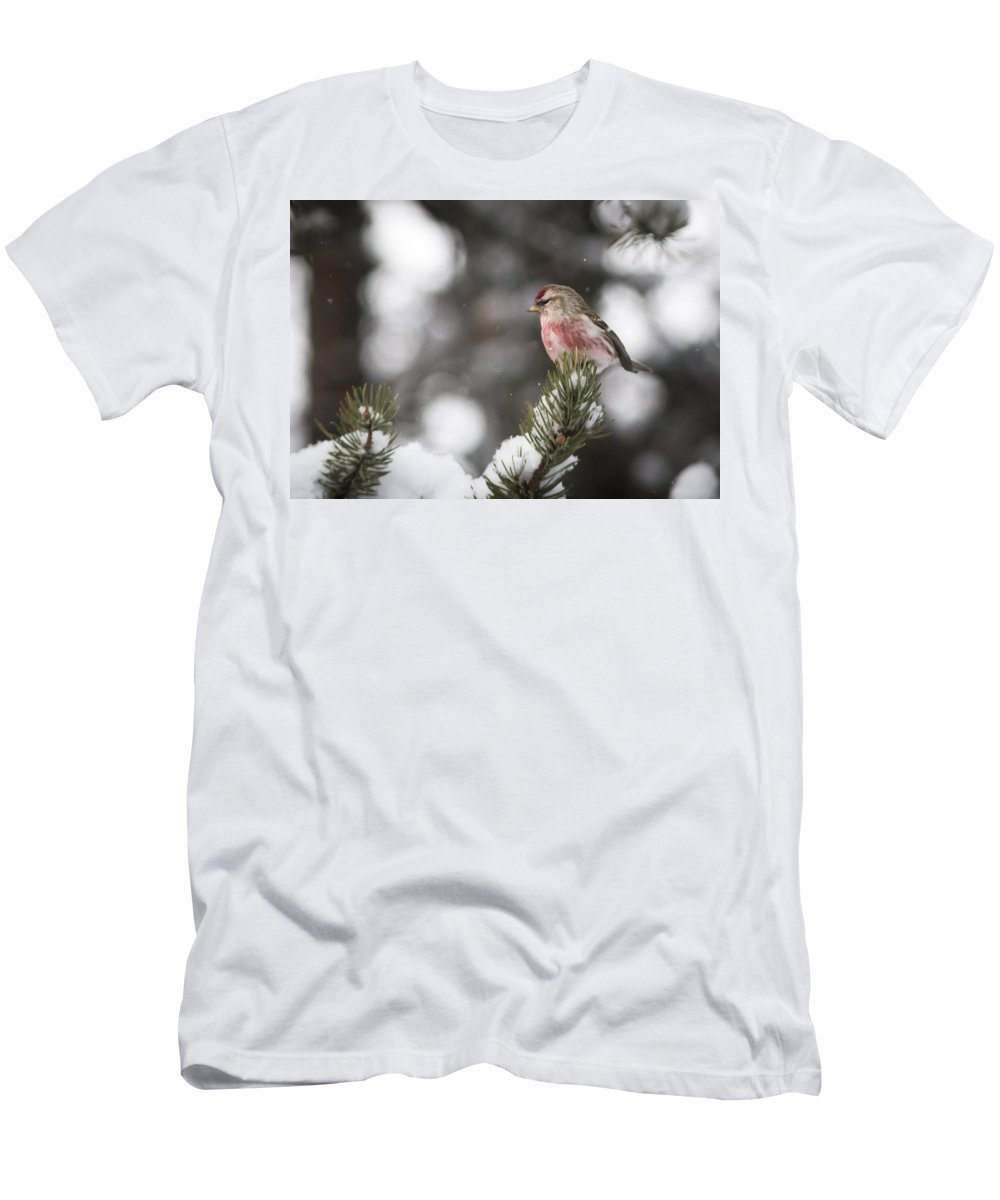 Redpoll Men's T-Shirt (Athletic Fit) featuring the photograph Tree Snow Sitter by Schalk Lombard