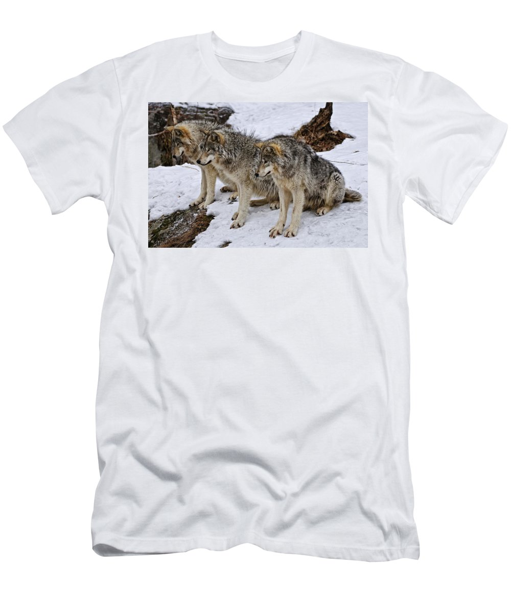 Michael Cummings Men's T-Shirt (Athletic Fit) featuring the photograph We Three Kings by Michael Cummings