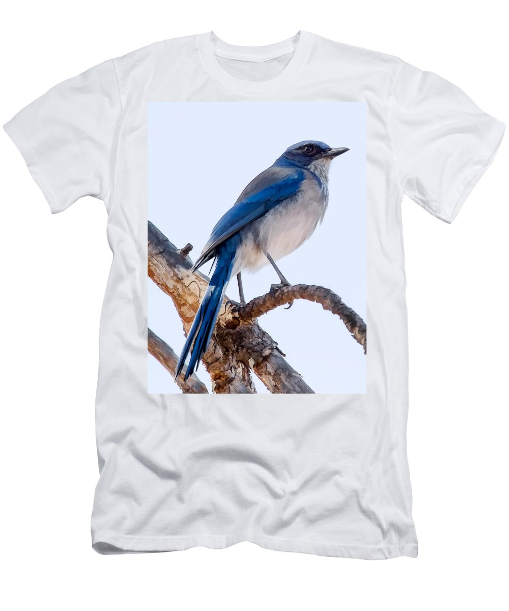 Dan Sabin Men's T-Shirt (Athletic Fit) featuring the photograph Western Scrub-jay by Dan Sabin