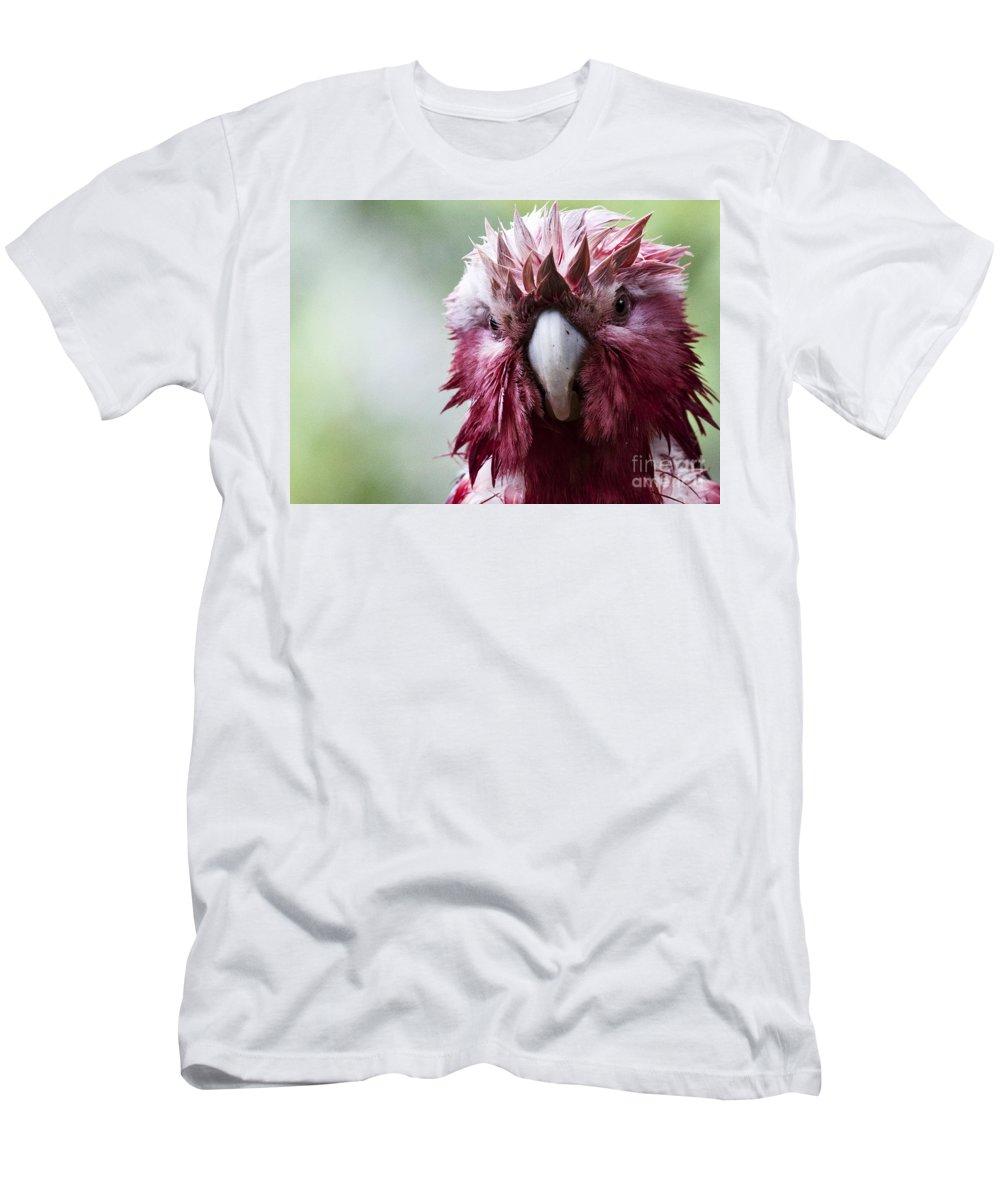 Galah T-Shirt featuring the photograph Wet galah by Sheila Smart Fine Art Photography