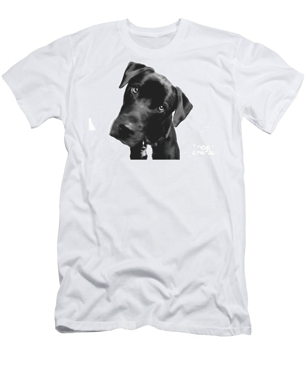 Labrador Men's T-Shirt (Athletic Fit) featuring the photograph What by Amanda Barcon