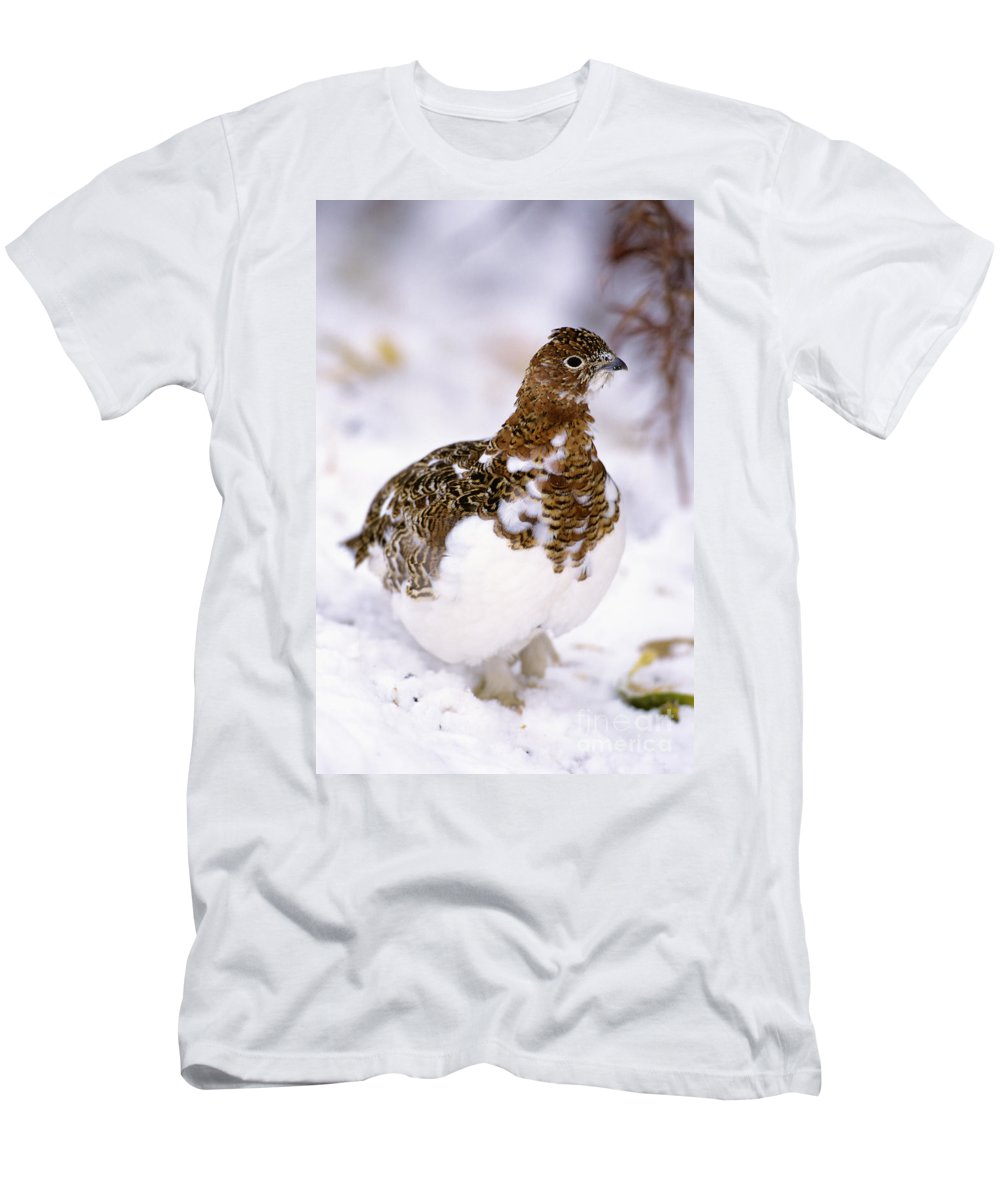 Alaska Men's T-Shirt (Athletic Fit) featuring the photograph Willow Ptarmigan by John Hyde - Printscapes