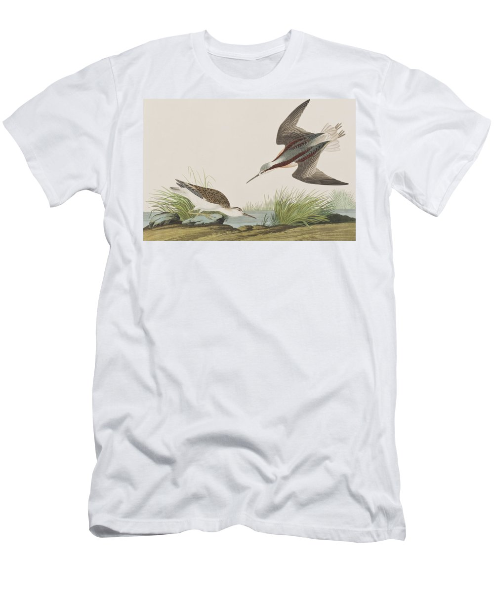 Plate 254 Men's T-Shirt (Athletic Fit) featuring the painting Wilson's Phalarope by John James Audubon