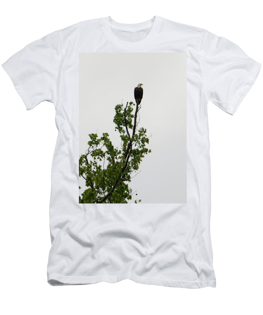 Men's T-Shirt (Athletic Fit) featuring the photograph Bald Eagle by Renee McAndrew