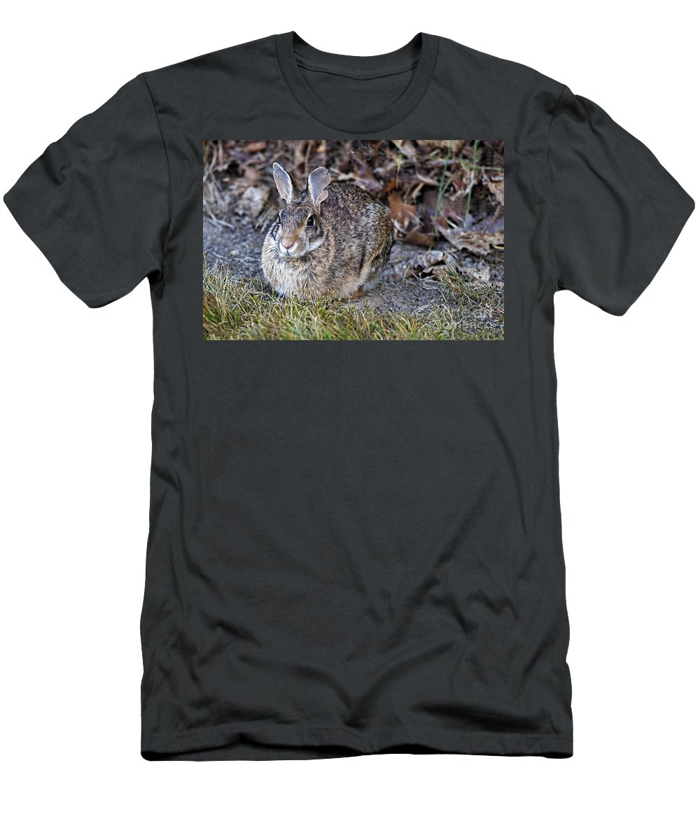 Rabbit Men's T-Shirt (Athletic Fit) featuring the photograph Rabbit by Sharon Talson