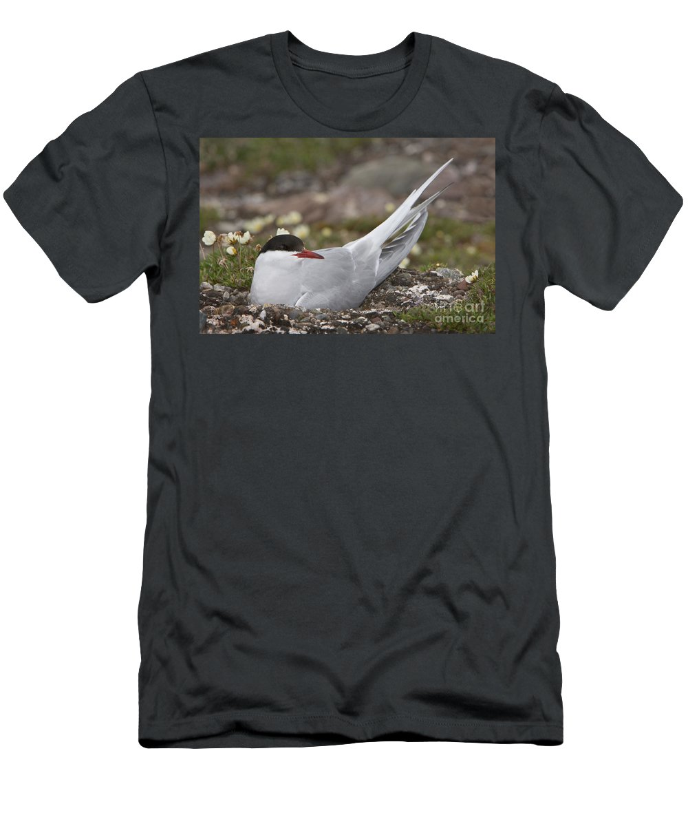 Nest Men's T-Shirt (Athletic Fit) featuring the photograph Arctic Tern In Its Nest by John Shaw