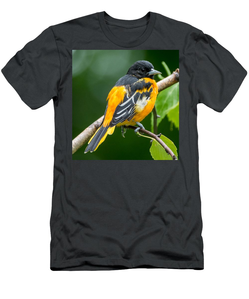 Bird Men's T-Shirt (Athletic Fit) featuring the photograph Baltimore Oriole by Richard Kitchen