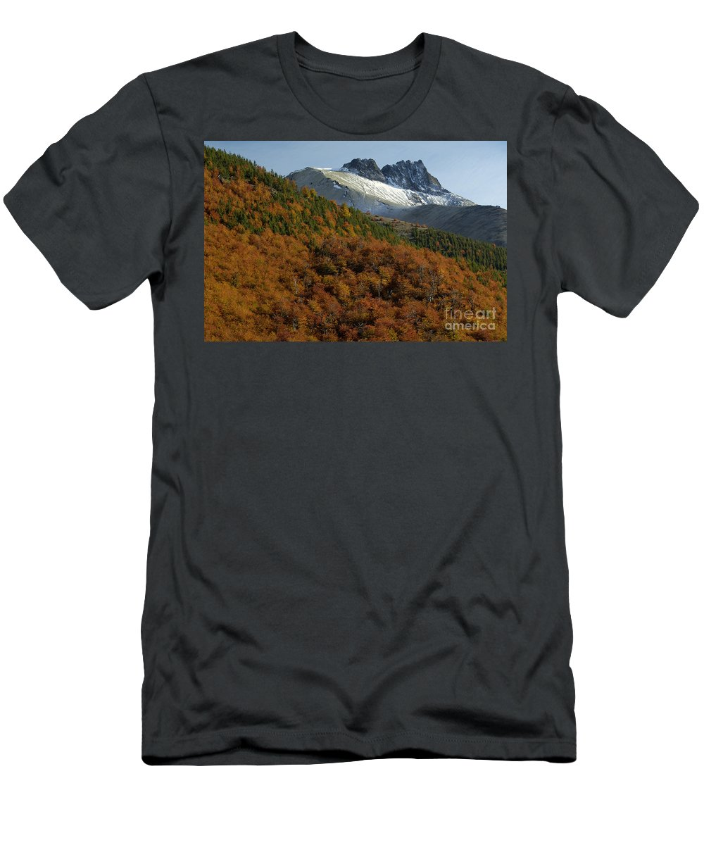 Nothofagus Men's T-Shirt (Athletic Fit) featuring the photograph Beech Forest, Chile by John Shaw