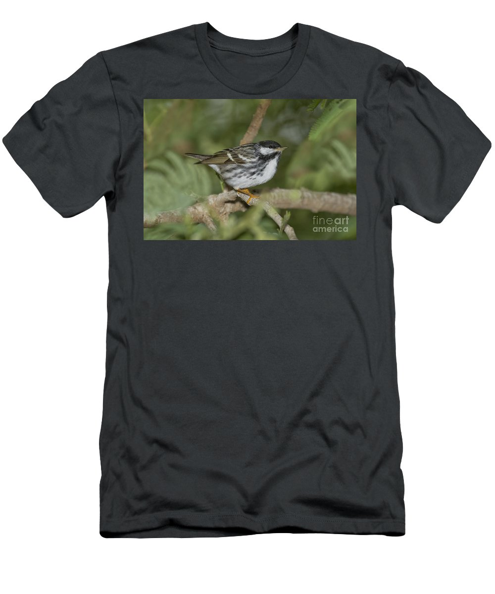 Blackpoll Warbler Men's T-Shirt (Athletic Fit) featuring the photograph Blackpoll Warbler by Anthony Mercieca