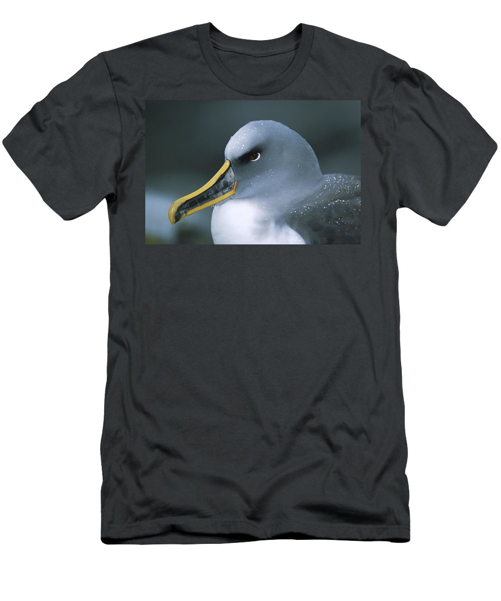 Feb0514 Men's T-Shirt (Athletic Fit) featuring the photograph Bullers Albatross With Colorful Bill by Tui De Roy
