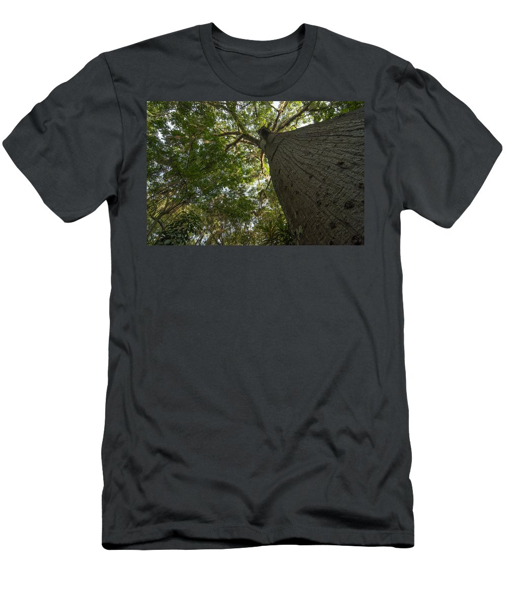 Tree Men's T-Shirt (Athletic Fit) featuring the photograph Ceiba Tree by Jess Kraft