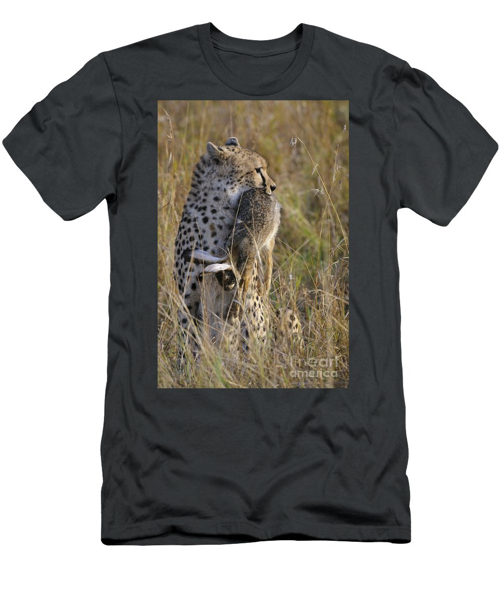 Acinonyx Jubatus Men's T-Shirt (Athletic Fit) featuring the photograph Cheetah Carrying Its Prey by John Shaw