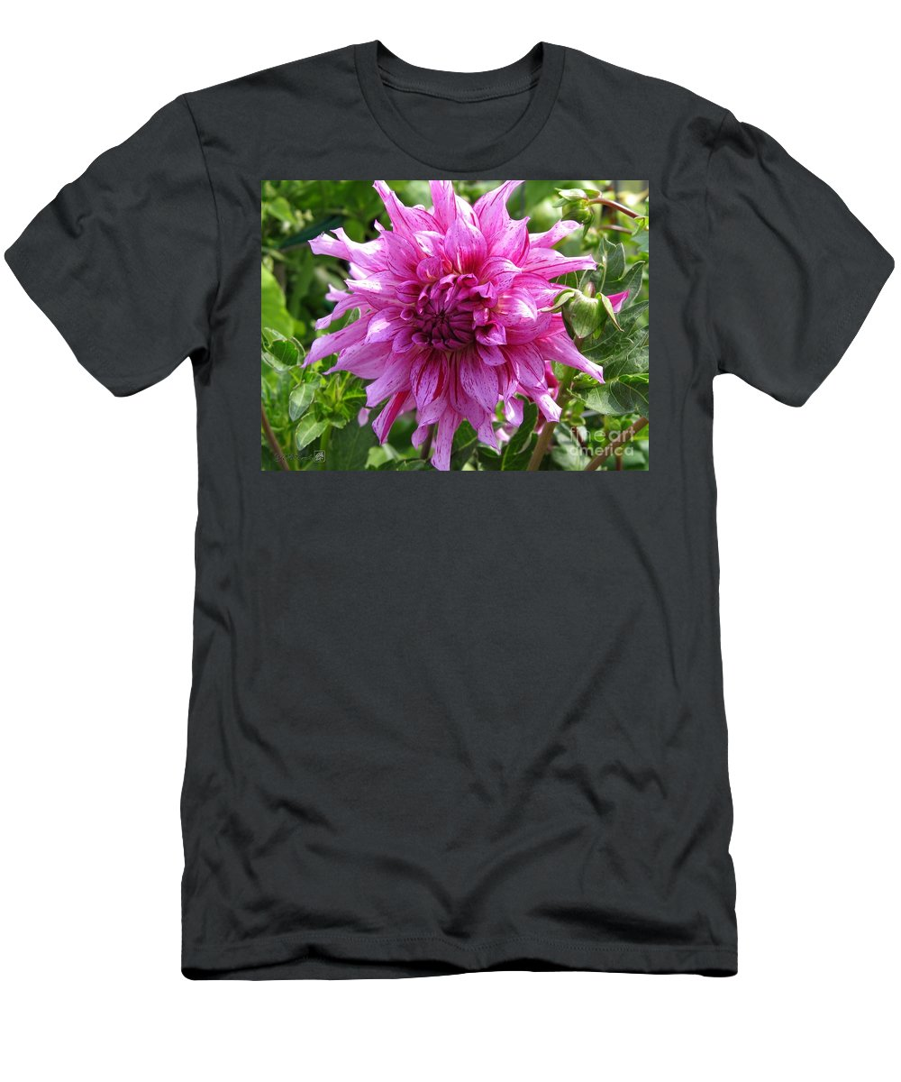Dahlia Men's T-Shirt (Athletic Fit) featuring the photograph Dahlia Named Annette C by J McCombie