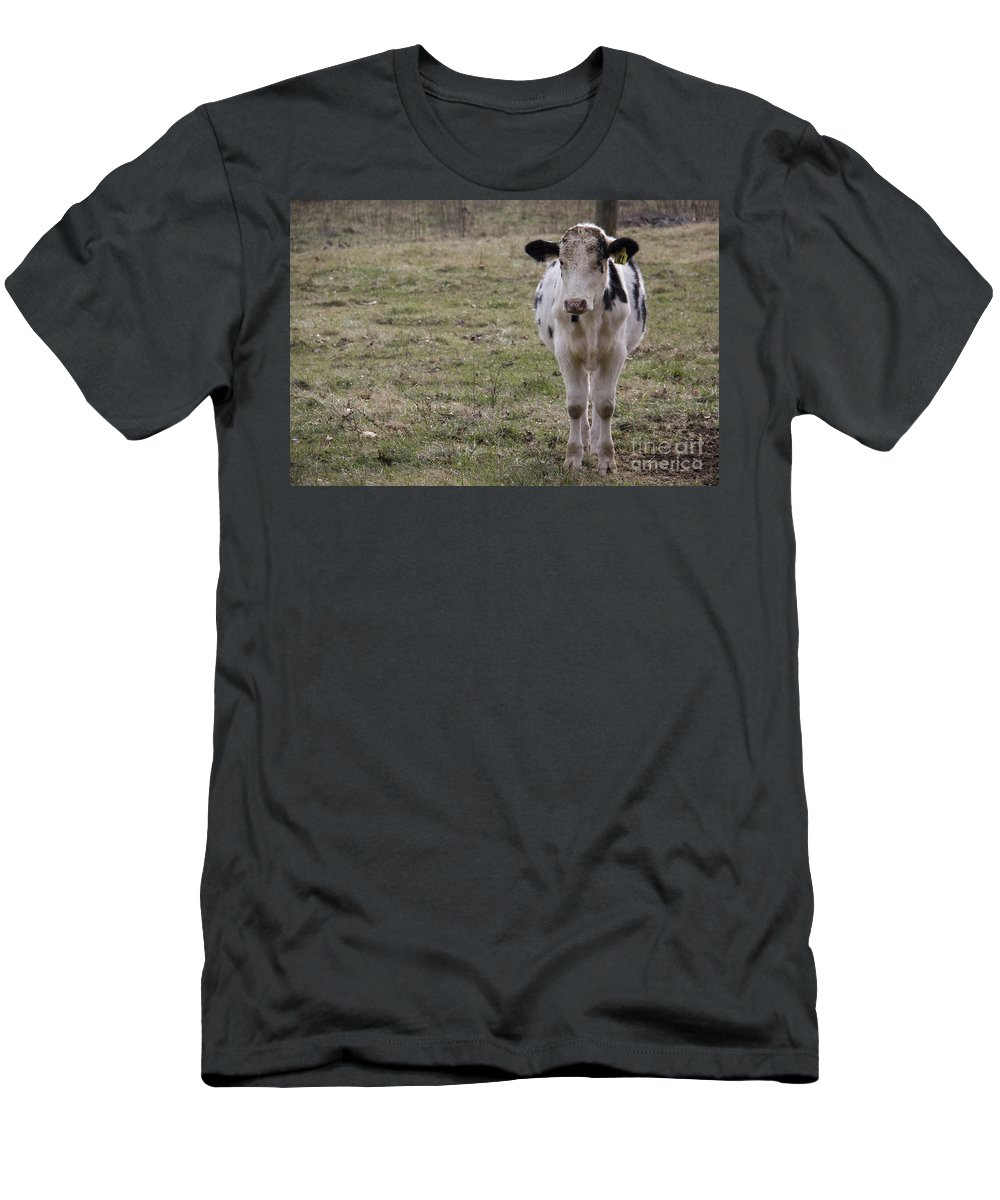 Cow Men's T-Shirt (Athletic Fit) featuring the photograph Daisy by Teresa Mucha