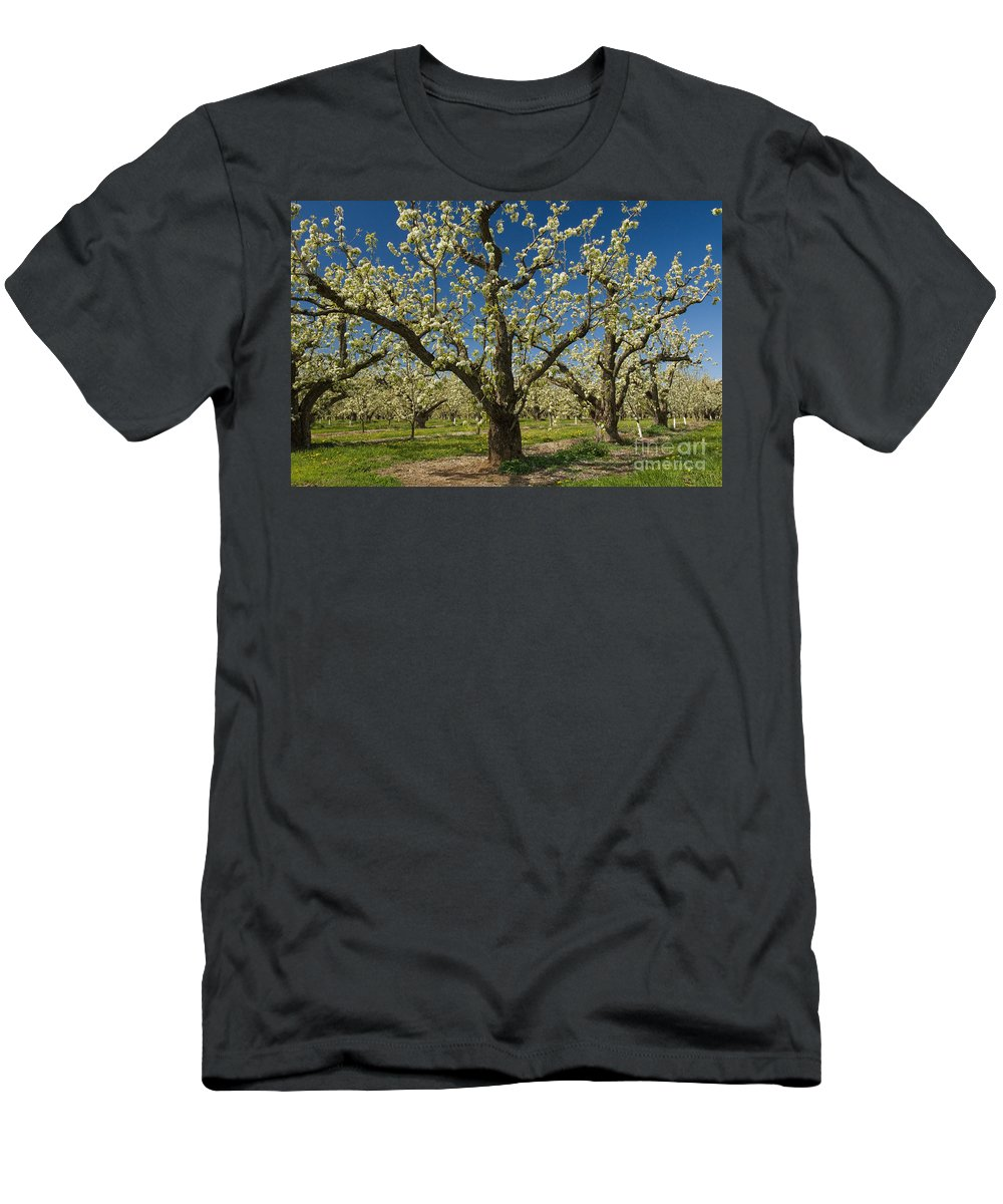 Orchard Men's T-Shirt (Athletic Fit) featuring the photograph Fruit Orchard by John Shaw