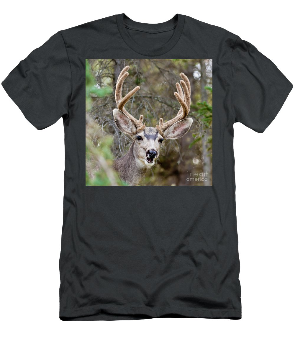 Adult Men's T-Shirt (Athletic Fit) featuring the photograph Funny Mule Deer Buck Portrait With Velvet Antler by Stephan Pietzko