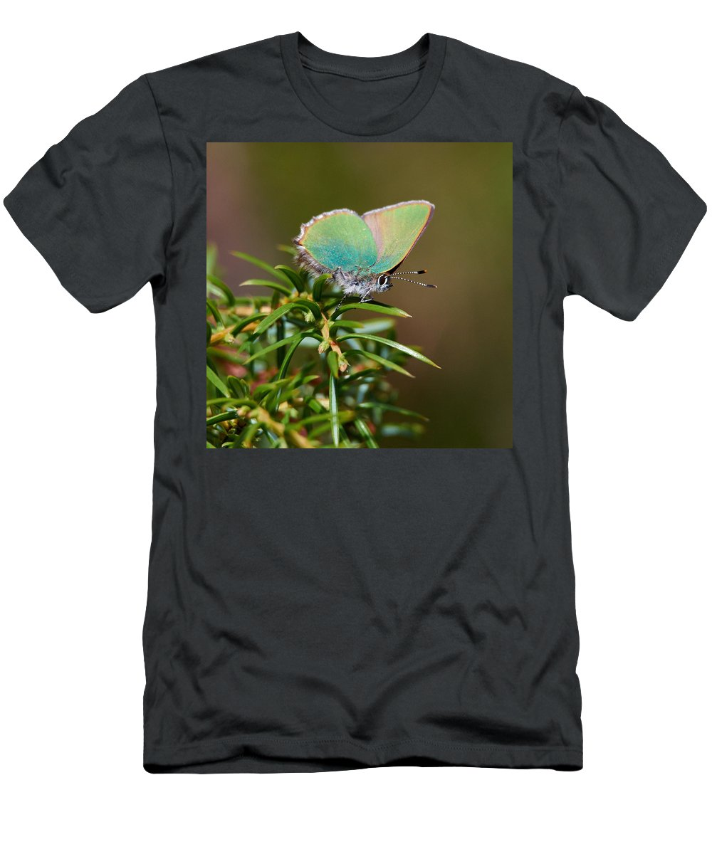 Callophrys Rubi Men's T-Shirt (Athletic Fit) featuring the photograph Green Hairstreak by Jouko Lehto