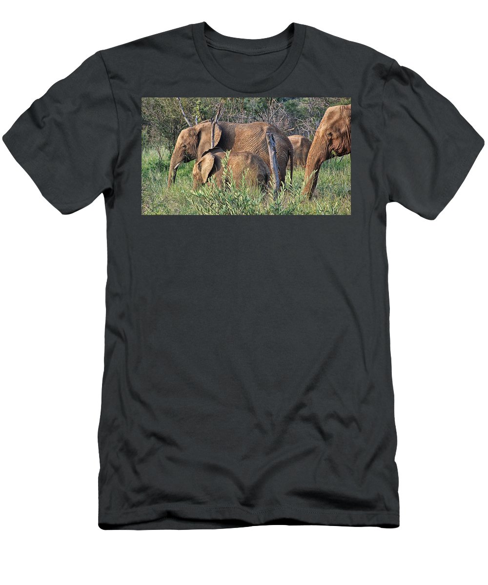 Elephant Bull Men's T-Shirt (Athletic Fit) featuring the photograph Greener Pastures by Douglas Barnard