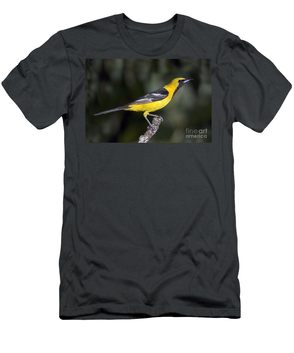 Hooded Oriole Men's T-Shirt (Athletic Fit) featuring the photograph Hooded Oriole Male by Anthony Mercieca