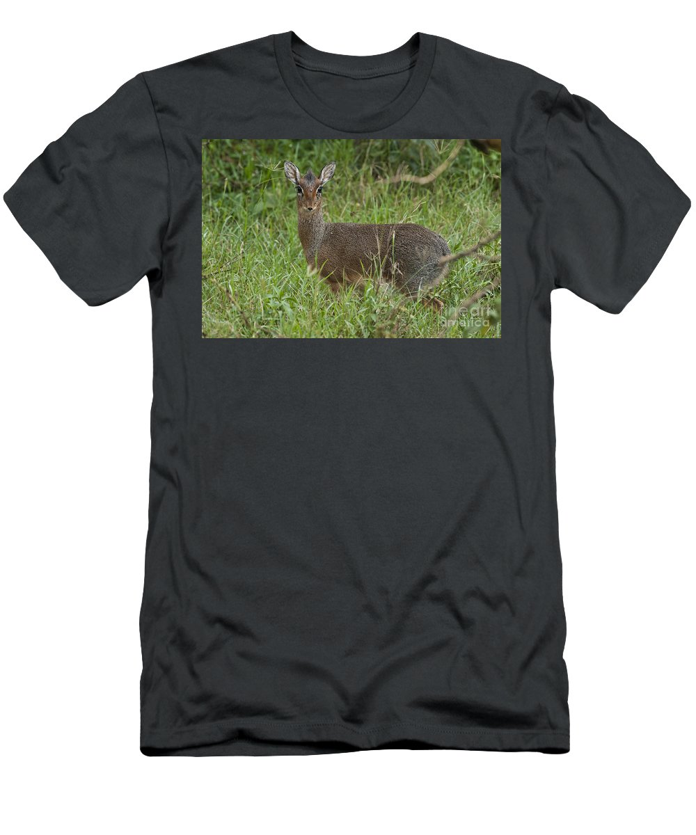 Africa Men's T-Shirt (Athletic Fit) featuring the photograph Kirks Dik-dik by John Shaw