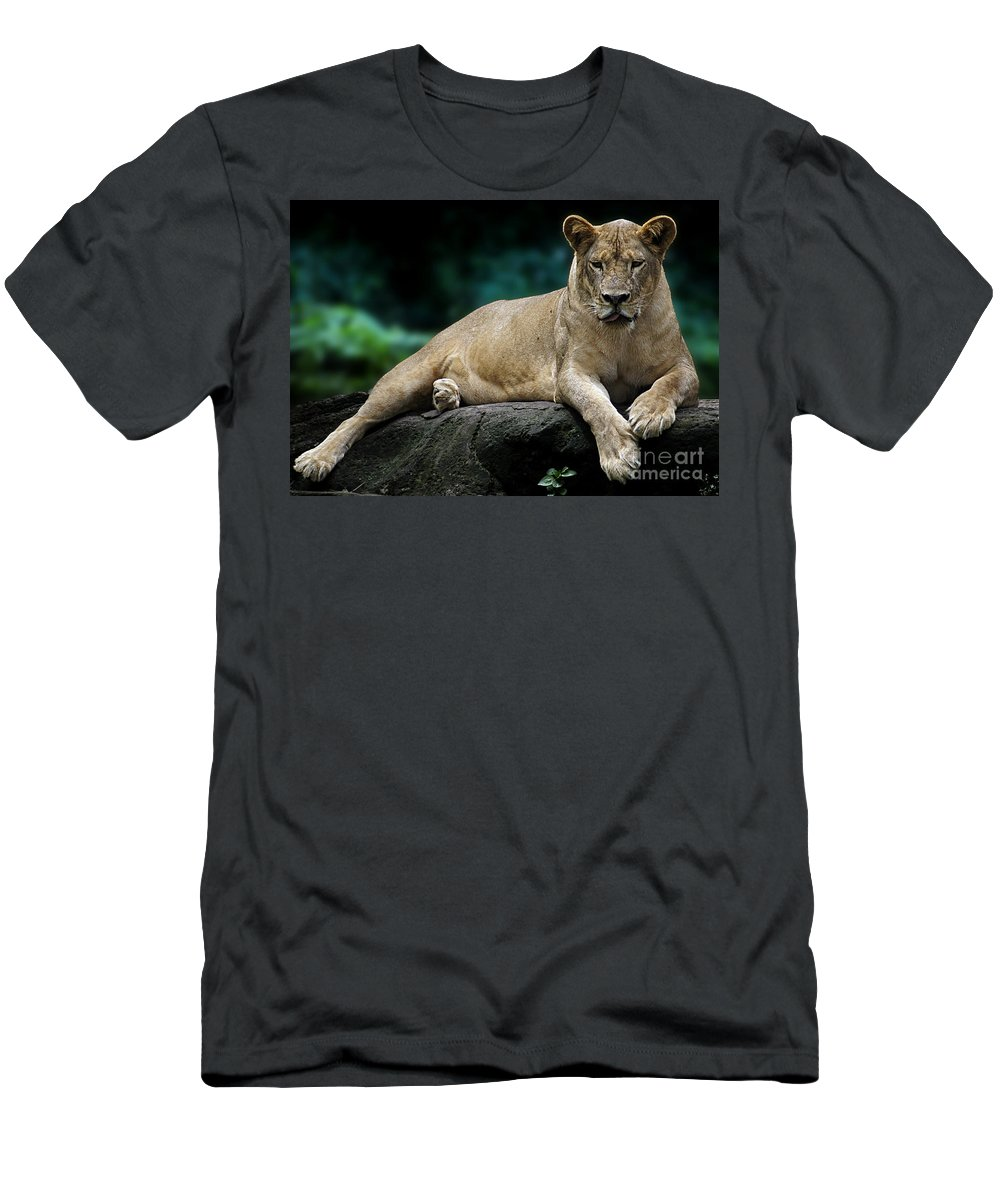 Animal Men's T-Shirt (Athletic Fit) featuring the photograph Look At Me by Ben Yassa