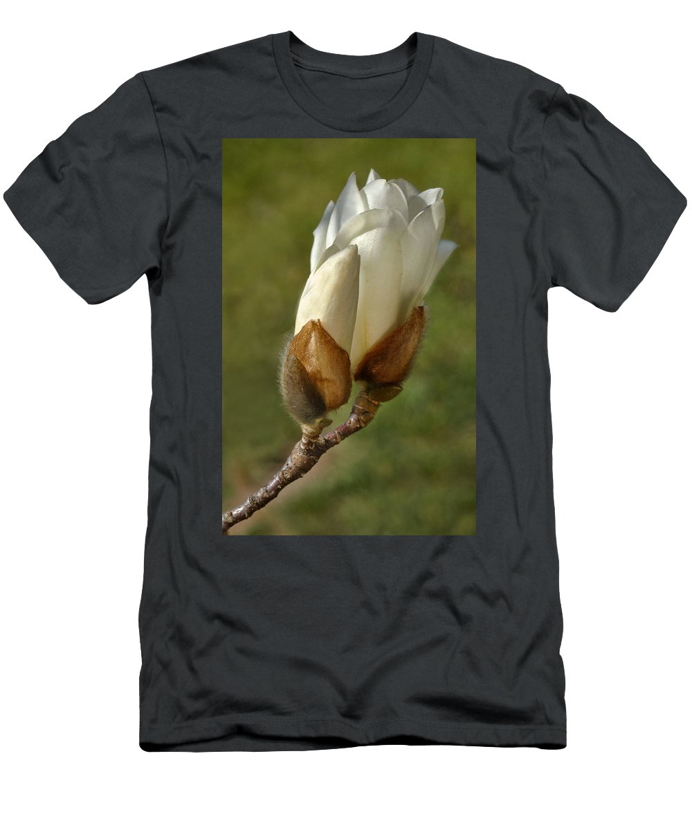 Magnolia Blossom Men's T-Shirt (Athletic Fit) featuring the photograph Magnolia Blossom by Dave Mills