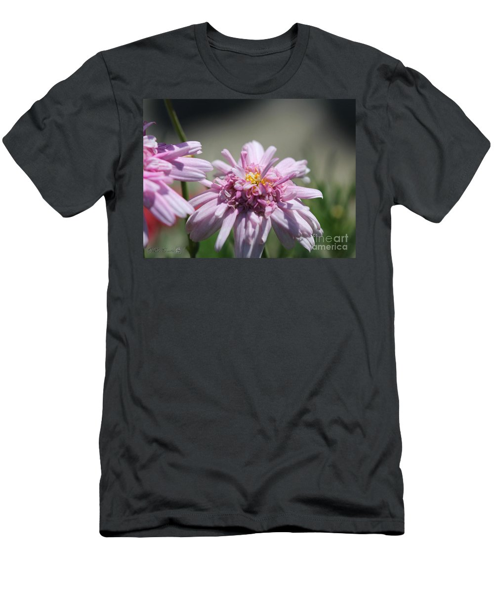 Mccombie Men's T-Shirt (Athletic Fit) featuring the photograph Marguerite Daisy Named Double Pink by J McCombie