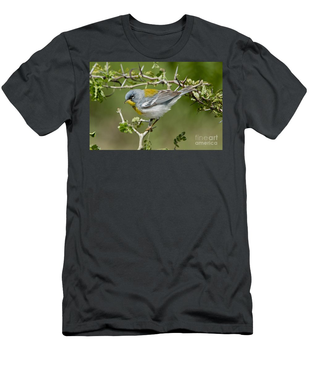 Northern Parula Men's T-Shirt (Athletic Fit) featuring the photograph Northern Parula by Anthony Mercieca