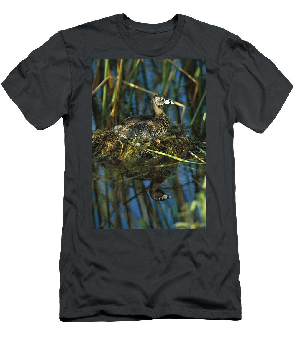 Feb0514 Men's T-Shirt (Athletic Fit) featuring the photograph Pied-billed Grebe Nesting Texas by Tom Vezo
