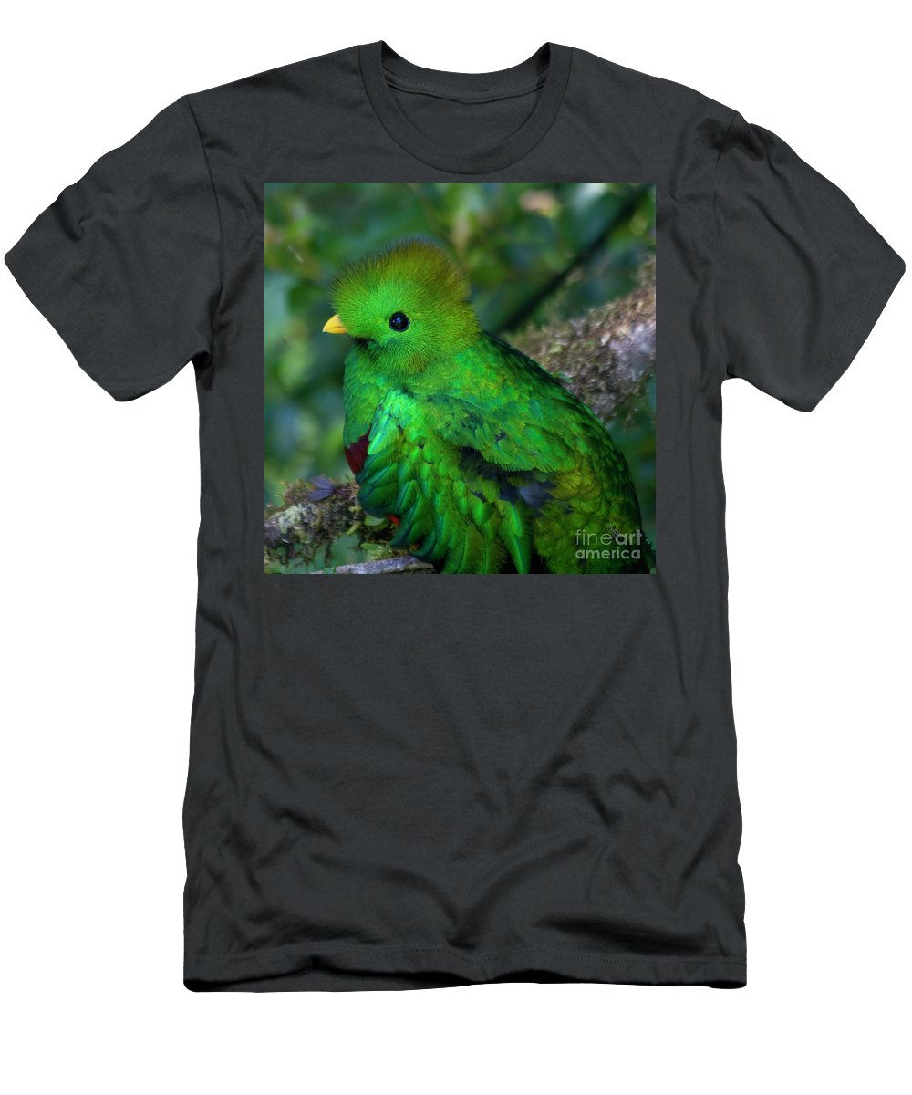 Bird Men's T-Shirt (Athletic Fit) featuring the photograph Quetzal by Heiko Koehrer-Wagner
