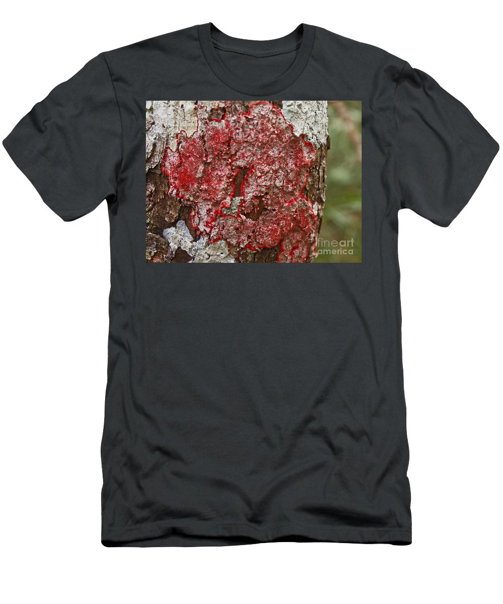 America Men's T-Shirt (Athletic Fit) featuring the photograph Red Lichen by Howard Stapleton