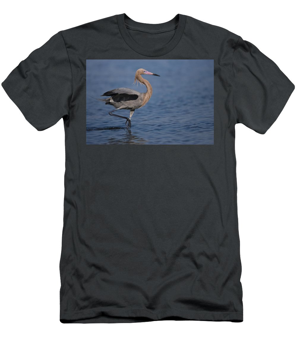 Feb0514 Men's T-Shirt (Athletic Fit) featuring the photograph Reddish Egret Wading Texas by Tom Vezo