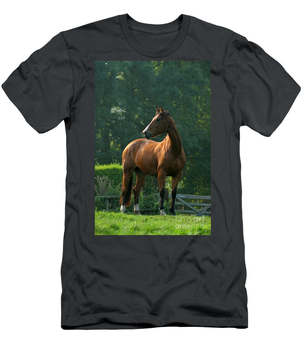 Horse Men's T-Shirt (Athletic Fit) featuring the photograph Sentinel by Angel Ciesniarska