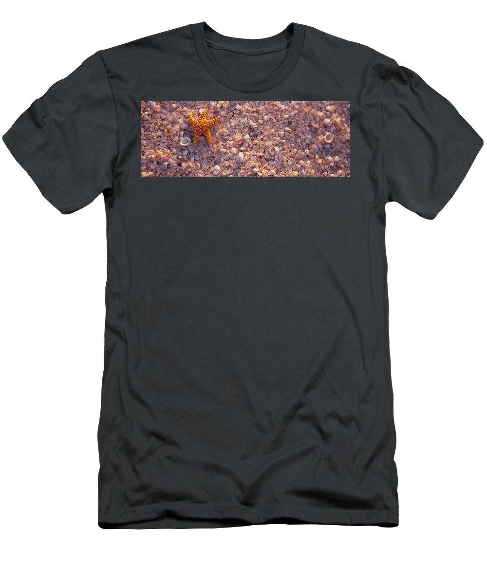 Photography Men's T-Shirt (Athletic Fit) featuring the photograph Starfish On The Beach, Lovers Key State by Animal Images