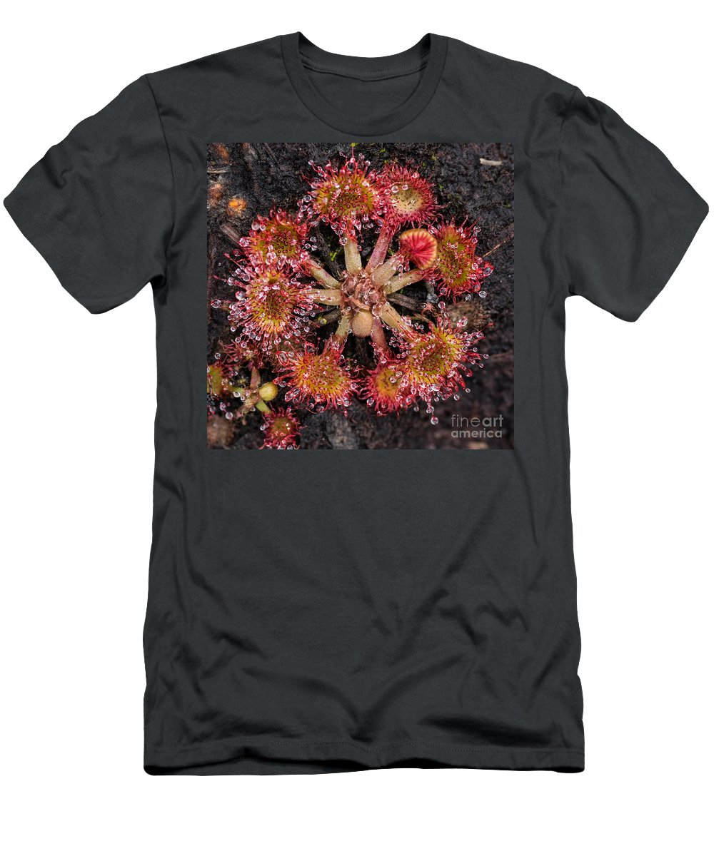 Close-up Men's T-Shirt (Athletic Fit) featuring the photograph Sundew by Brothers Beerens
