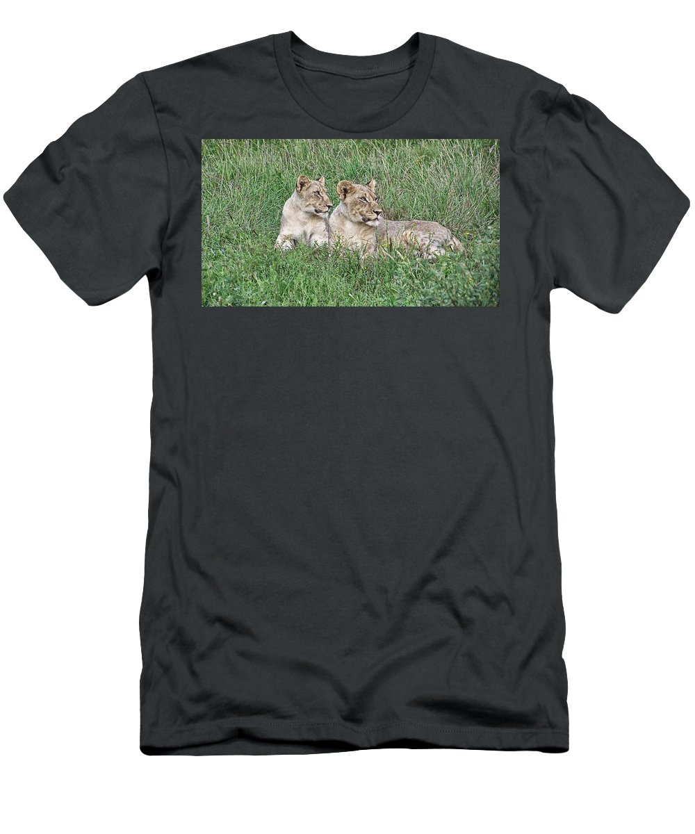 Lioness Men's T-Shirt (Athletic Fit) featuring the photograph Twins by Douglas Barnard