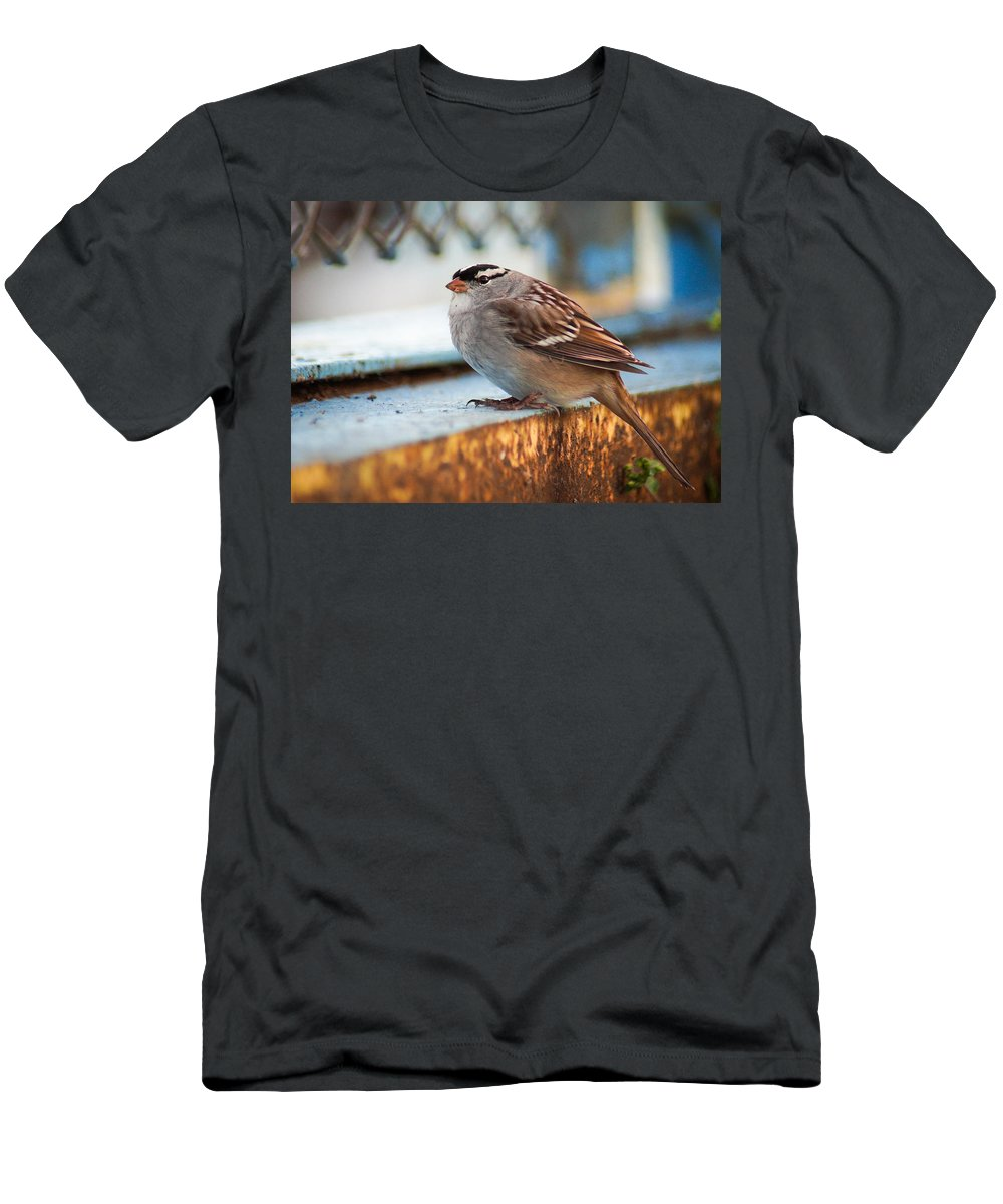 Bird Men's T-Shirt (Athletic Fit) featuring the photograph White Crowned Sparrow by Bill Pevlor
