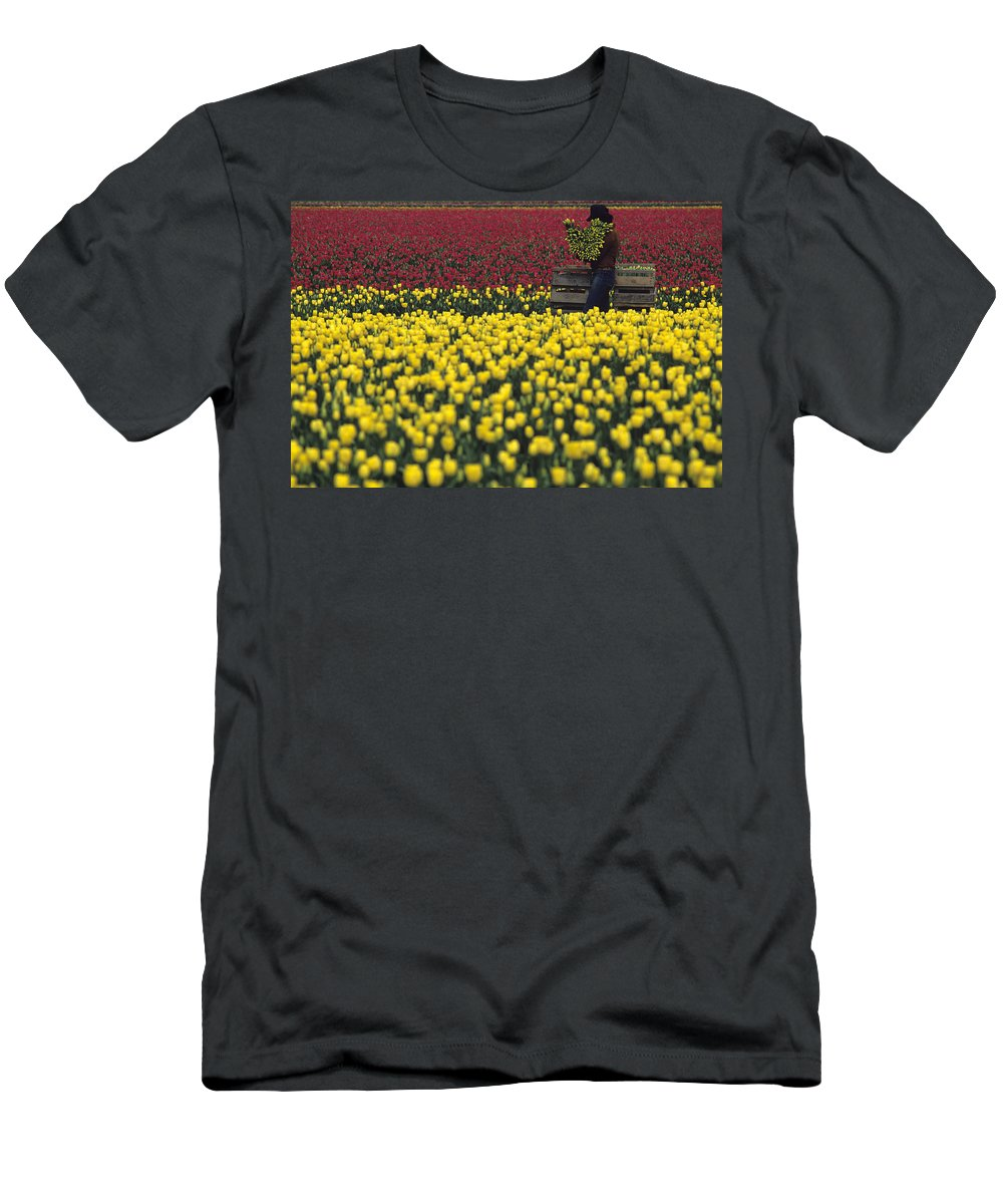 Travel Men's T-Shirt (Athletic Fit) featuring the photograph Worker Carrying Tulips by Jim Corwin