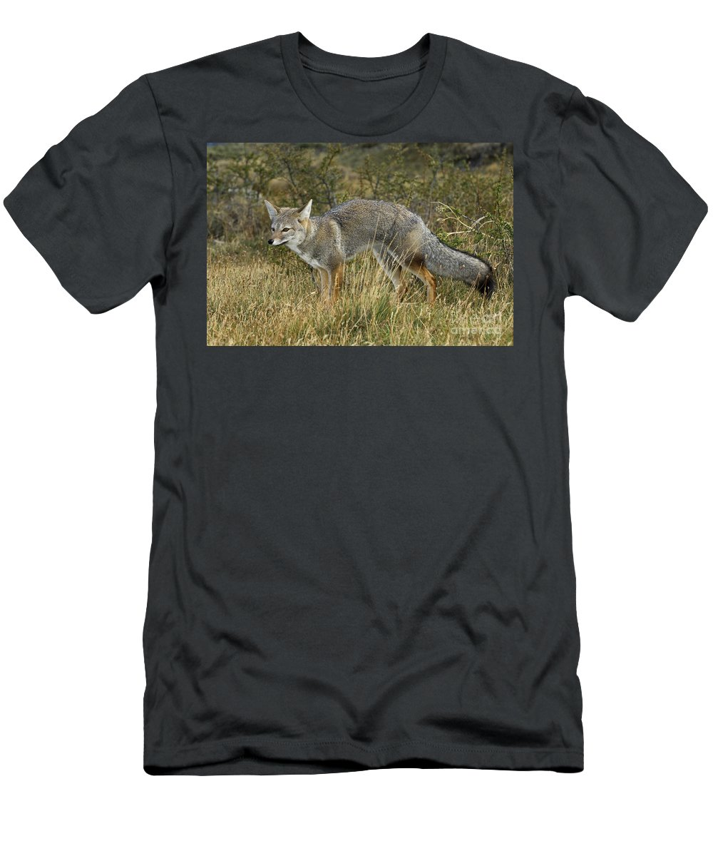 Patagonia Grey Fox Men's T-Shirt (Athletic Fit) featuring the photograph Patagonia Grey Fox by John Shaw