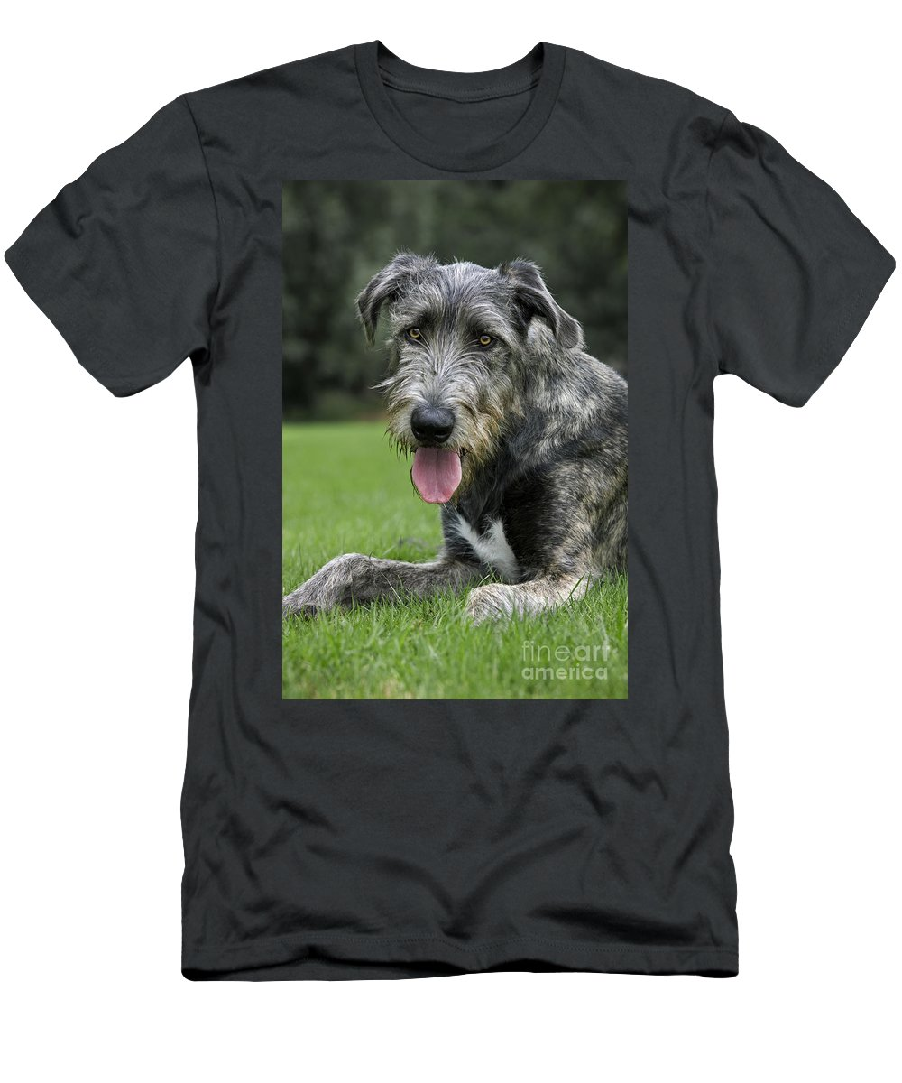 Irish Wolfhound Men's T-Shirt (Athletic Fit) featuring the photograph 101130p060 by Arterra Picture Library