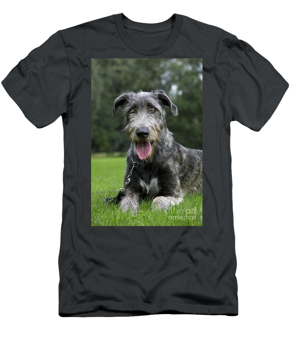 Irish Wolfhound Men's T-Shirt (Athletic Fit) featuring the photograph 101130p062 by Arterra Picture Library