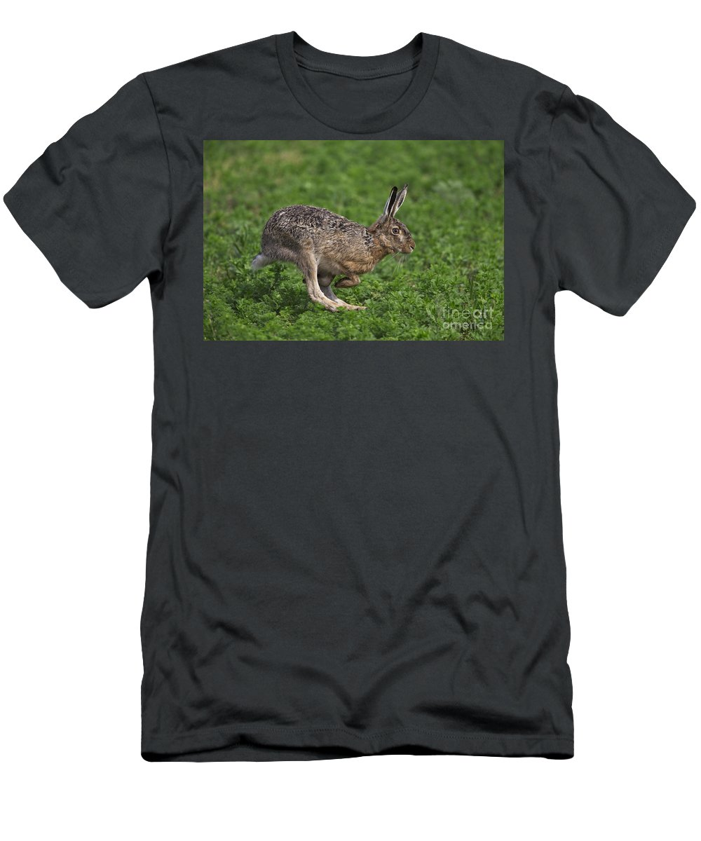European Hare Men's T-Shirt (Athletic Fit) featuring the photograph 110202p214 by Arterra Picture Library
