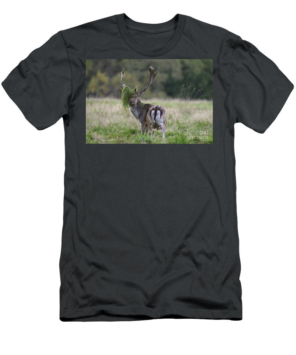 Fallow Deer Men's T-Shirt (Athletic Fit) featuring the photograph 110221p138 by Arterra Picture Library